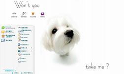 狗宝宝电脑主题 xp版 1.0