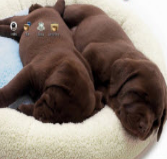 狗狗午睡电脑主题 win7版 1.0