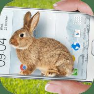 手机的小兔子 1.1 中文版