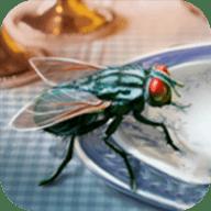 模拟苍蝇生存 v1.0.0