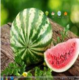 清凉西瓜电脑主题 win7版 1.0