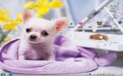 吉娃娃狗狗电脑主题 win7版 1.0