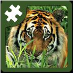 野生动物益智拼图 6.1 安卓版