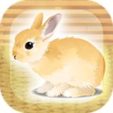 治愈系兔子养成 1.0 安卓版