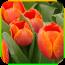 花朵消消乐 3.5.0 安卓版
