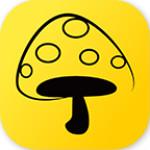 蘑菇丁 3.1.0 安卓版