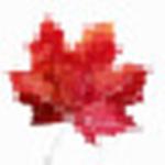 楓葉千圖網無水印下載軟件 1.0 官方免費版