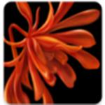 栖家app 2.2.52 最新版